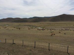 Landschaft bei Ulaanbaatar von der Transmongolischen Eisenbahn aus fotografiert