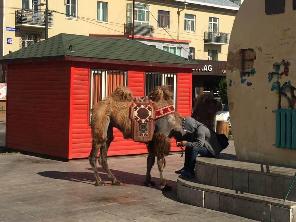 Kamel auf der Beatle Straße neben dem Monument