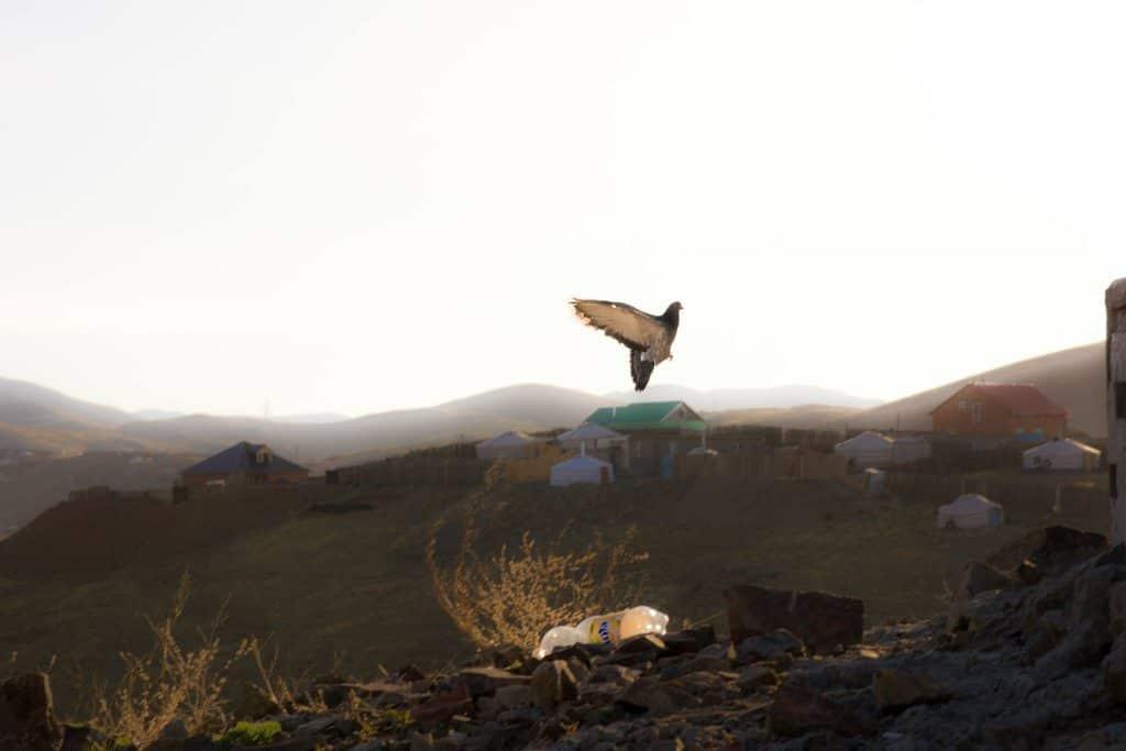 Vogel im Norden von Ulaanbaatar