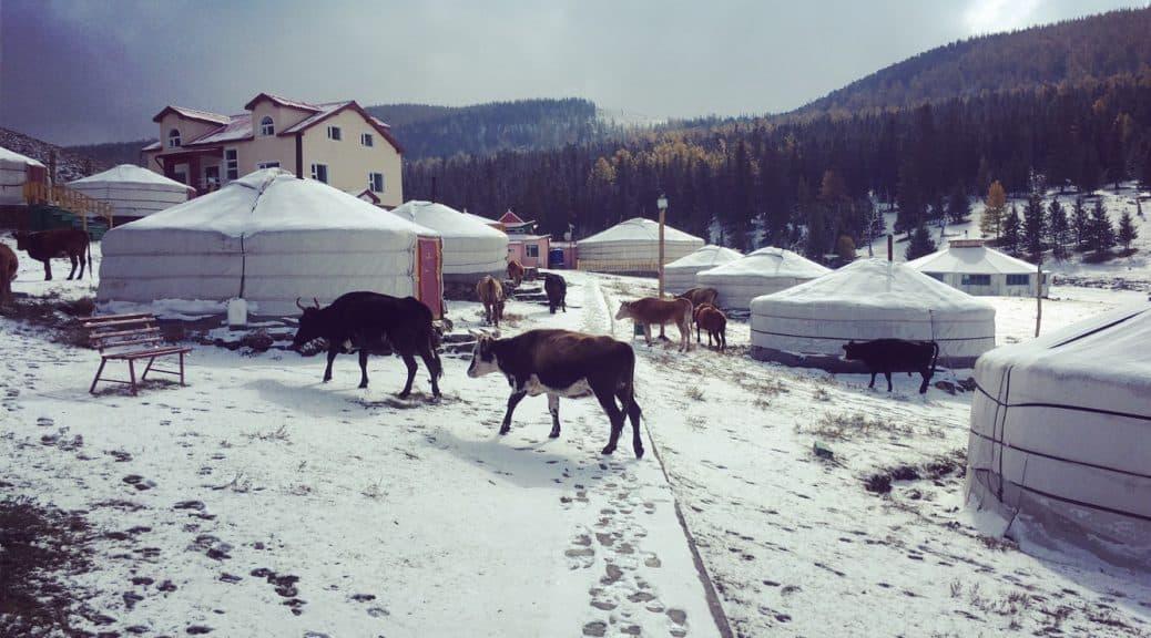 Gercamps im Winter mit Kühen