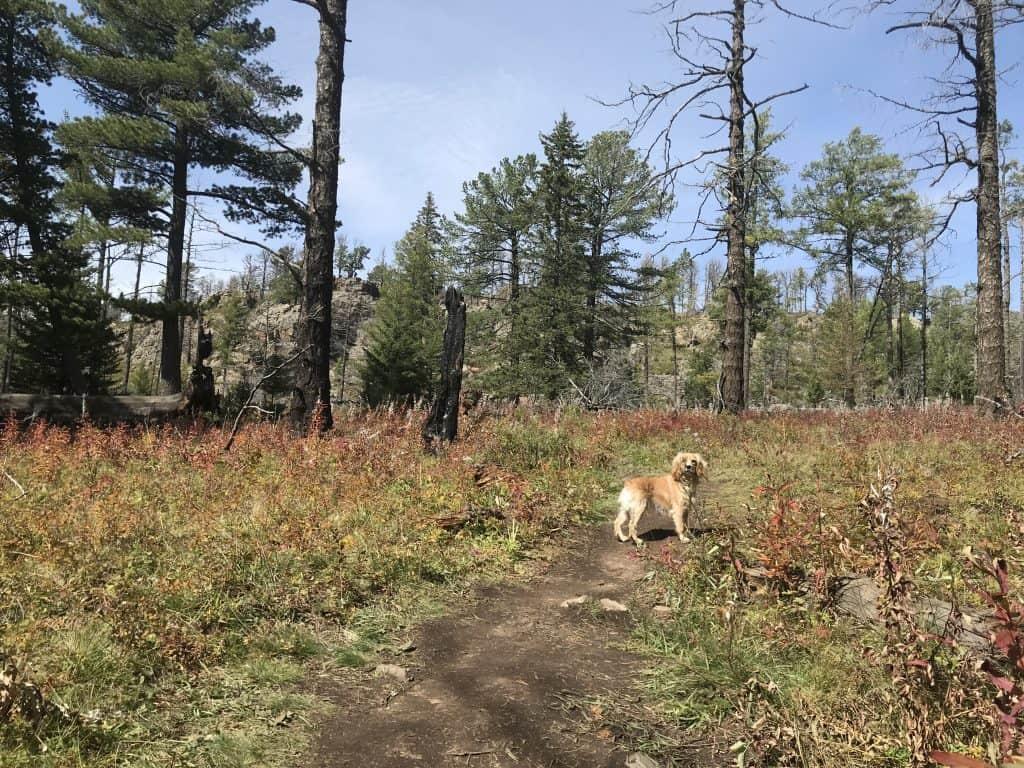 Bobby läuft an Bäumen mit Brandschäden vorbei. Bei einer Wanderung