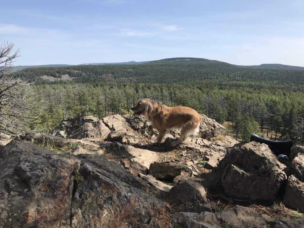 Bobby auf einer kleineren Spitze des Berges