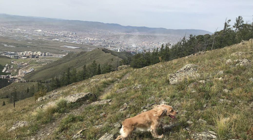 Bobby auf einem kleinen Hügel am Rande des Gebirges auf ca. 1750 Meter Höhe